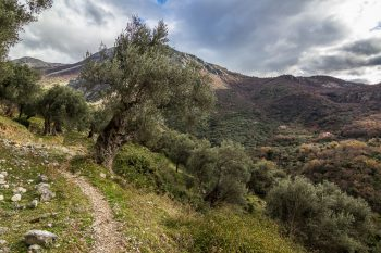 Olive_Grove_Trail_Stari_Bar