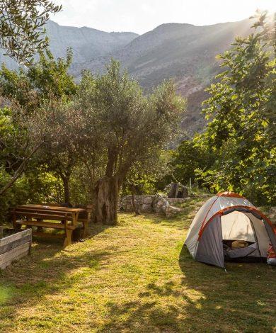 bartula-my-olive-garden